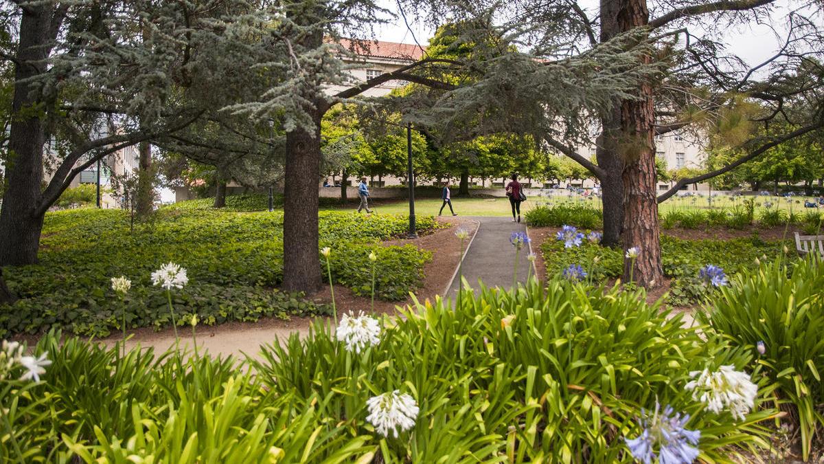 Summer at UC Berkeley